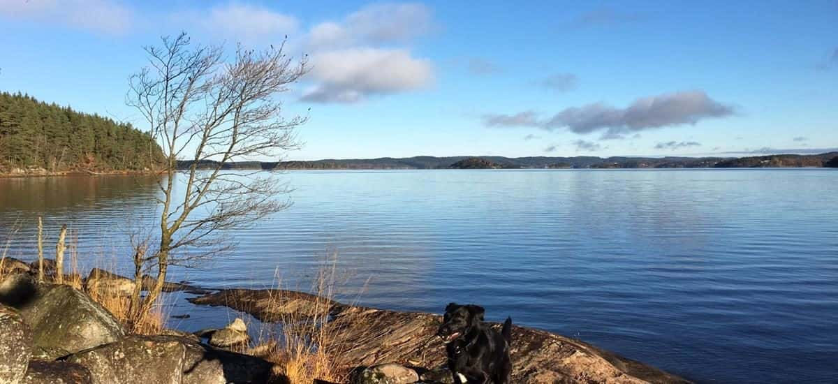 Beautiful view of Lake Mjörn, Norsesund. Here you can go trekking Gotaleden or bake cinnamon buns all with Meet the Locals.