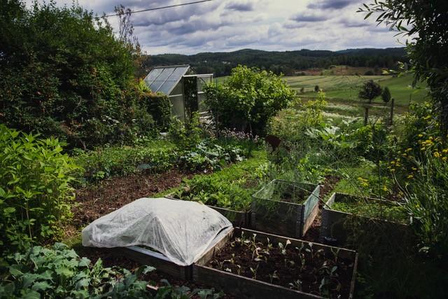 Självförsörjande trädgård. Träffa en trädgårdsmästare i sin egna privata trädgård med konceptet Meet the Locals