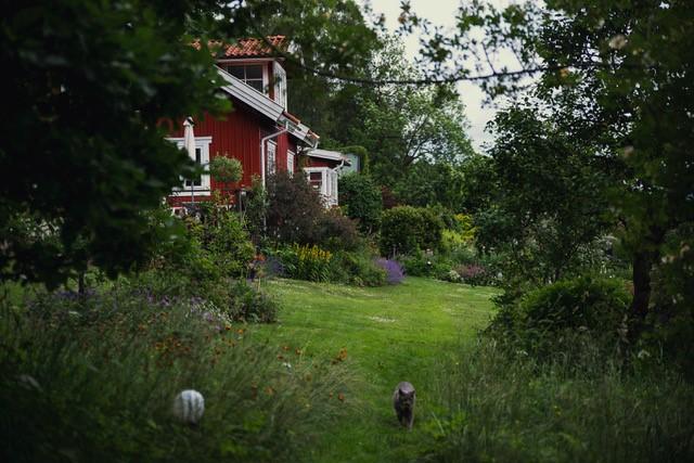 Rött torp från 1890-talet. Träffa trädgårdsmästaren i sin egen trädgård utanför Rävlanda. Med konceptet Meet the Locals