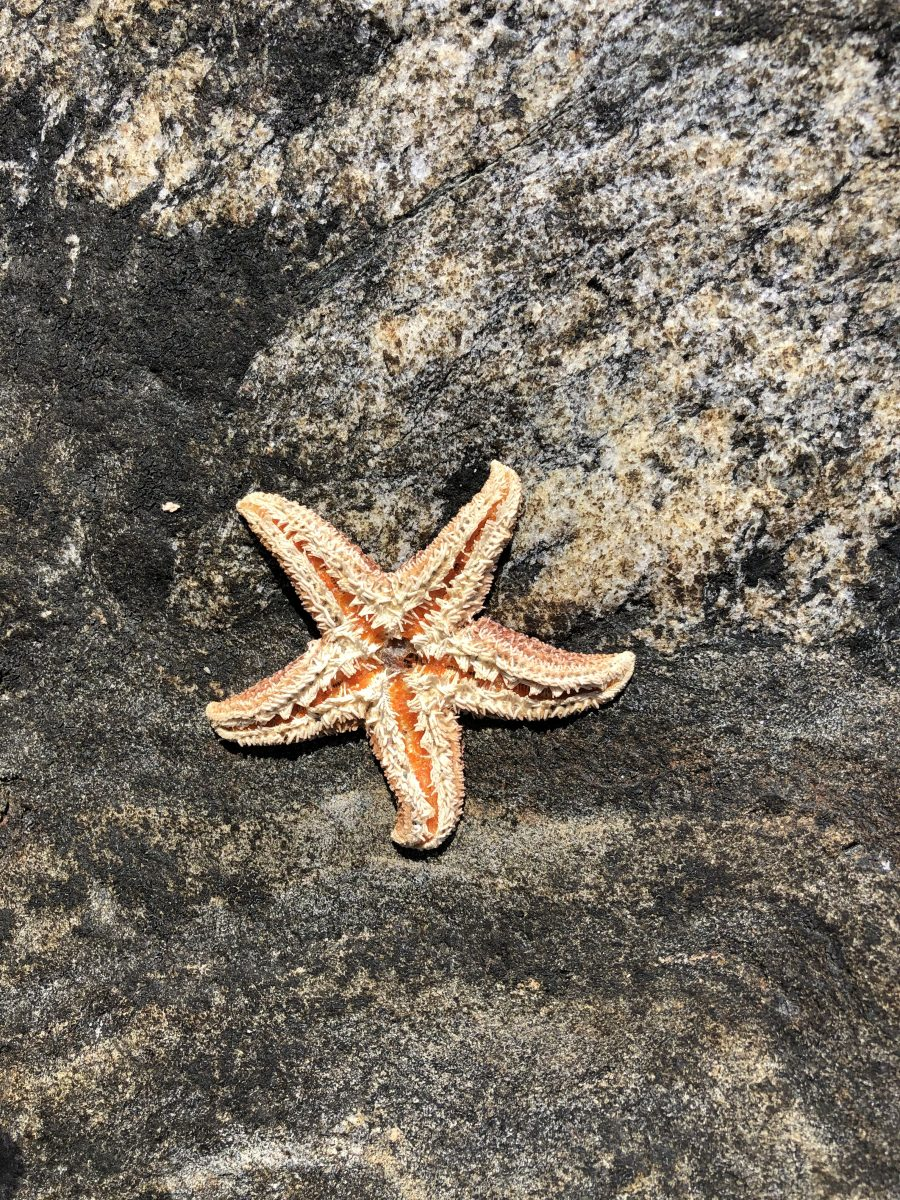 Sea star in the archipelago in Billdal outside Gothenburg. Go fishing crabs in Billdal with Meet the Locals.