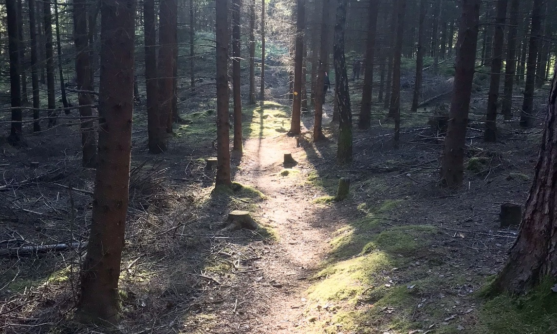 Forest in Hyssna. Here you can book a Local to do yoga, forest bathing and trekking. Meet the Locals